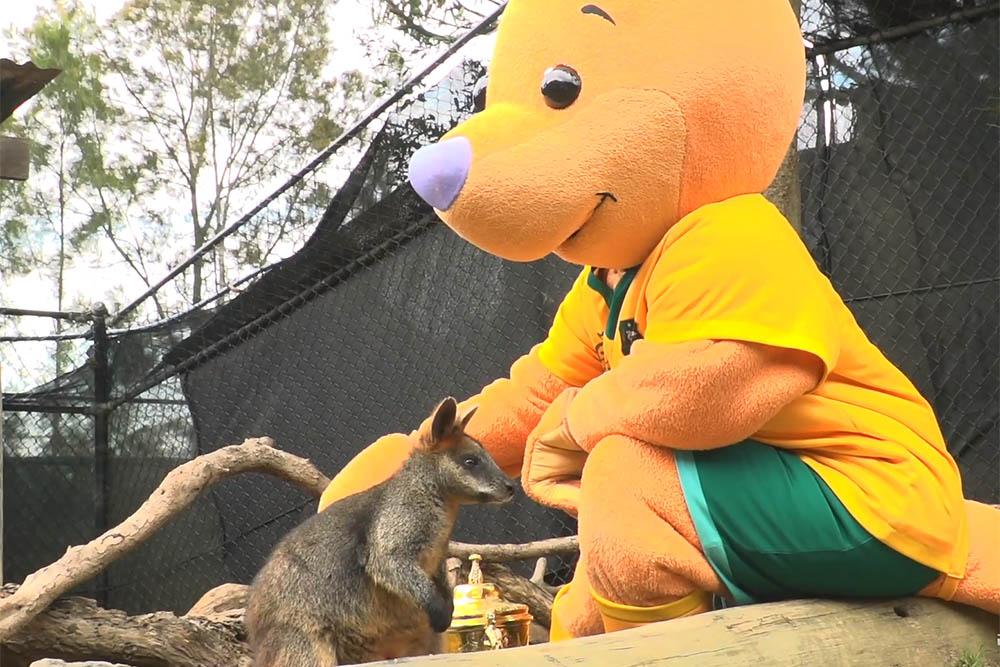Gold Blooded Tour: Wally visits Taronga Zoo